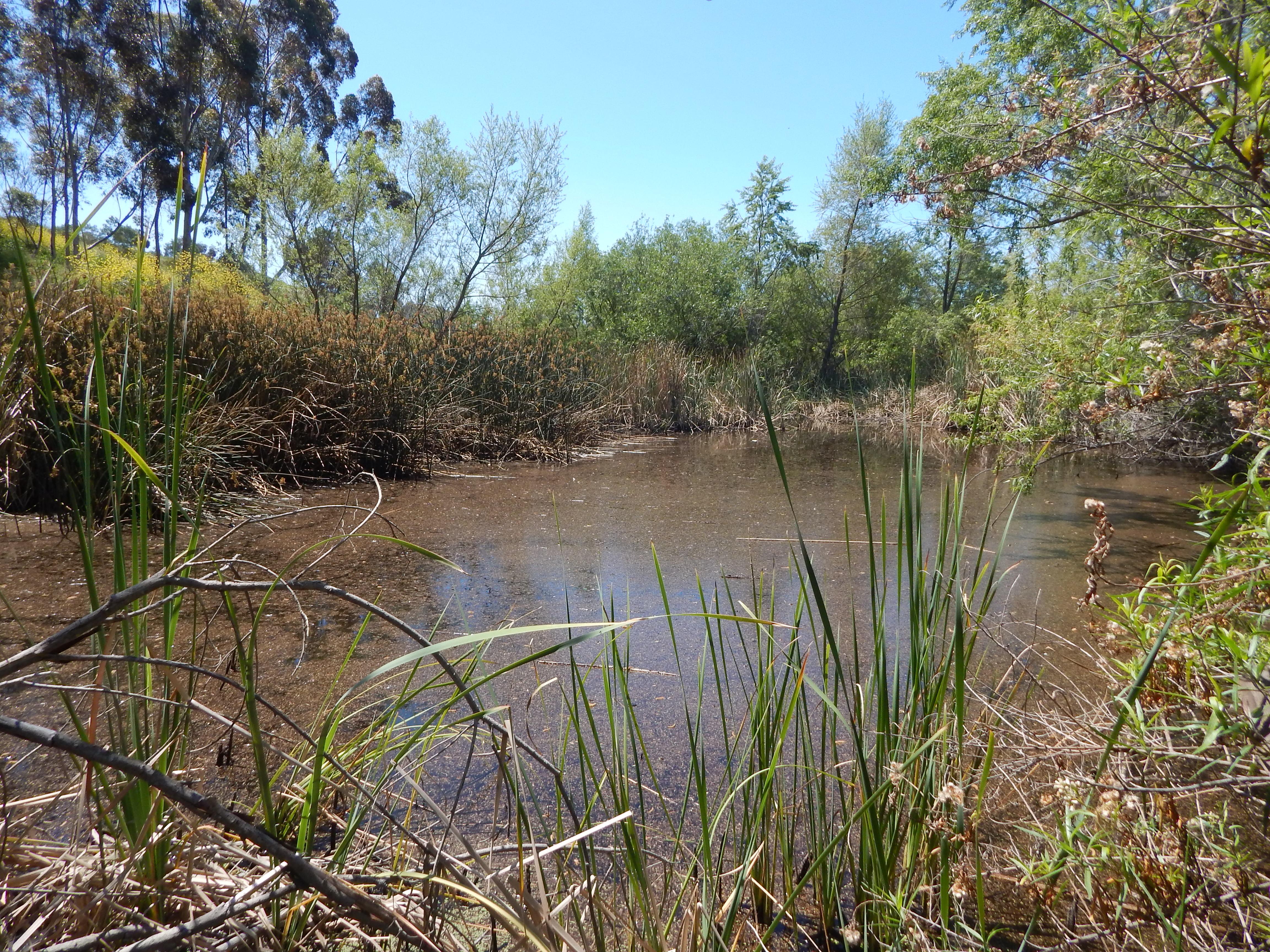 wetland habitat at prima 2